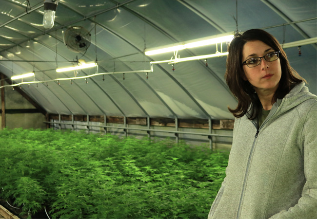 Documentary Series Kicks off in August with Cannabis Film