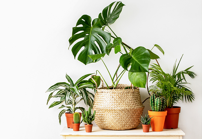 Houseplants: Take Care of Them, They'll Take Care of You